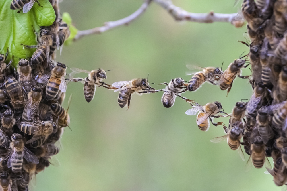 Bees-Team-Trust LeadershipWorks